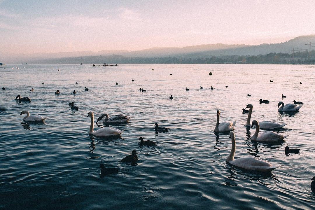 Alberto_Angelica_Switzerland_Day_One-24